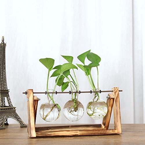 Gaddrt Plant Transparent Vase Creative Hydroponic Wooden Frame Coffee Shop Room Decr 28x14cm
