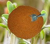 Kresse Gartenkresse Einfache 1000g frische, reine Ware Samen