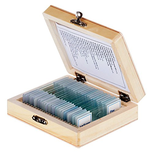 amscope-vetrini-per-microscopio-preparati-con-scatola-in-legno-25-vetrini