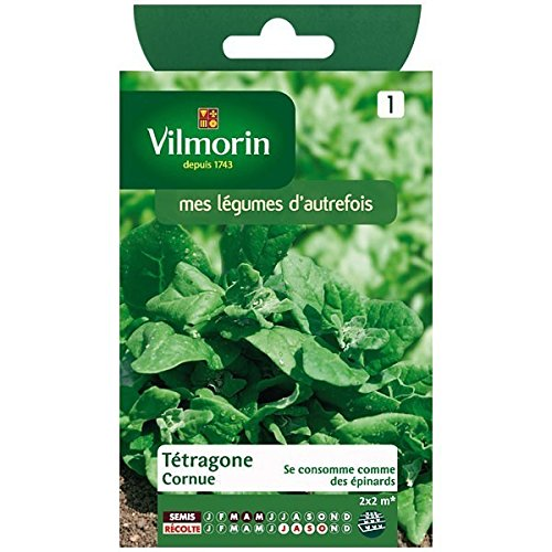 Vilmorin - Sachet graines Tétragone cornue