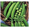 VEGETABLES PEA METEOR DWARF FIRST EARLY 420 FINEST SEEDS : everything five pounds (or less!)