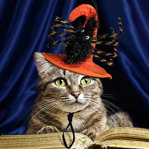 it Einer Spinne Fancy Dress für Hund Katze Special Pet Hat Halloween, Party Kostüm - Orange ()