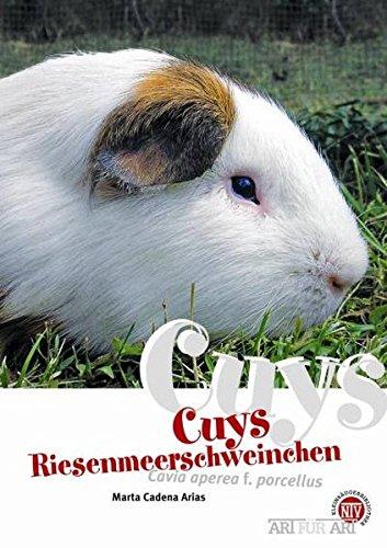 Cuys - Riesenmeerschweinchen: Cavia aperea f. porcellus (Art für Art / Kleinsäuger)
