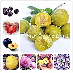 Pinkdose 10 Stück Rosaceae Prunus Cerasifera Bonsai Zierpflanze Kirschpflaume Strauchbaum, Outdoor Weit angebaute Myrobalan Pflaumenfrucht: gemischt