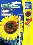 Sonnenblume 'King Kong' gelb, Riesensonnenblume, bis 4 m hoch ( mit Stecketikett) 'Helianthus annuus'
