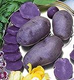 10 Pommes de terre 'Bleue d'Artois' ® ('Bleue de la Manche')
