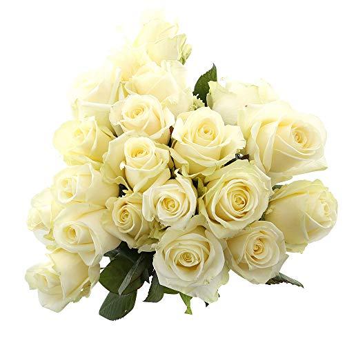 Choice of Green - 1 bouquet de rose blanche Avalanche Large - 20 tiges - Hauteur ↕ 60 cm - Qualité hollandaise - Frais du cultivateur