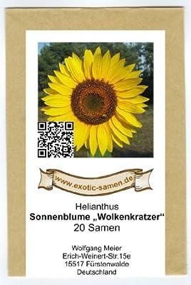 Riesen-Sonnenblume - Wolkenkratzer - Sky Scraper - 20 Samen von exotic-samen bei Du und dein Garten