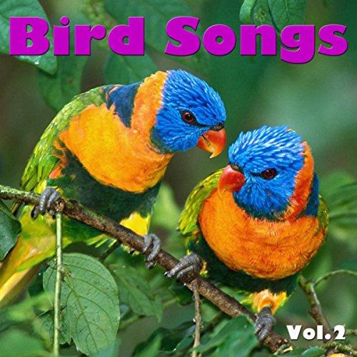 Collared Dove (Collared Dove)