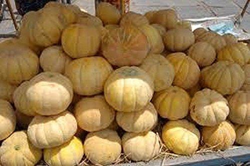 PLAT FIRM GRAINES DE GERMINATION: 50 - Graines: GÉANT!Douces Cantaloupes Juicy-WOW!Regarde-les!!!D'énormes melons juteux !!!SAVOUREUX!