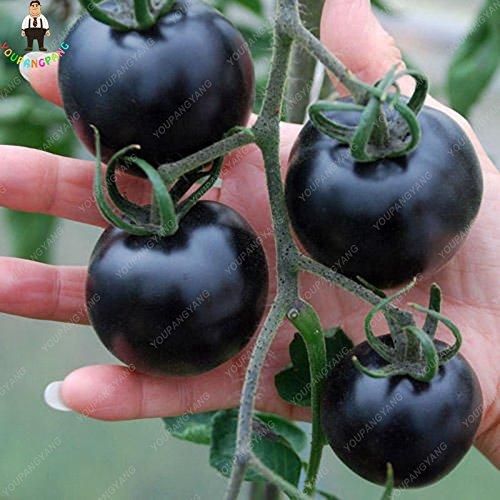 Galleria fotografica 200pcs / bag Black Tomato Semi rari semi di ortaggi frutta extra-Dolci 90% germinazione Flower Pot Fioriere