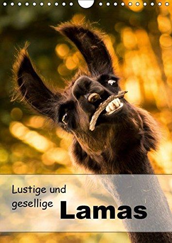 Lustige und gesellige Lamas 2019 (Wandkalender 2019 DIN A4 hoch): Liebevoll gestaltete Lama Fotografien. (Geburtstagskalender, 14 Seiten ) (CALVENDO Tiere)