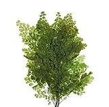 Decoflorales® - Konservierter Natur Lutti Farn; 1 Bund; Länge 14-18 cm