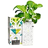Bottlecrop - Salat aus der Flasche | Japanischer Senfspinat | in Flasche | Einzugsgeschenk | Anzuchtsystem | Urban Farming | Geschenkidee | Hydrokultur | Pflanzen ohne Erde| Kräuter Fentsterbank | Kräutergarten Fenster| vertikaler Garten | nachhaltig |