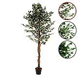 Nexos Künstlicher Ficus Benjamin Kunstpflanze Kunstbaum mit vielen Zweigen Echtholz-Stamm und Topf - Gesamthöhe 150 185 190 cm – grün weiß Größe wählbar