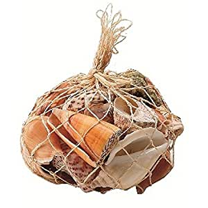MaxJam - Conchiglie marine assortite, 300 g (circa 35 conchiglie)