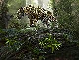 Fototapete (97063) JAGUAR on the PROWL Größe 350 x 260 cm in 7 BAHNEN 50 cm Breite x 260 cm Höhe - hoch qualitativer fotorealistischer Digitaldruck ! Inkl. Tapetenkleister- XXL Tiere Natur Landschaft Bäume Afrika Wald Dschungel - Tapete Poster Wandbild Bildtapete Wall Mural