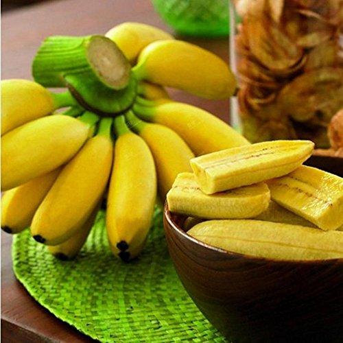 Juzie seltene zwerg bananenbaum samen Mini Bonsai Obst exotischen hausgarten Pflanzen