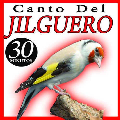 Canto Del Jilguero Cardelia Canto De Pajaros Silvestrismo