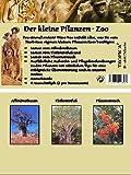 Mini-Gewächshaus - Pflanzen-Zoo - mit Samen vom Affenbrotbaum, Elefantenfuss und Pfauenstrauch