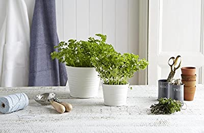 Sophie Conran For Portmeirion Herb Pot, White by Portmeirion
