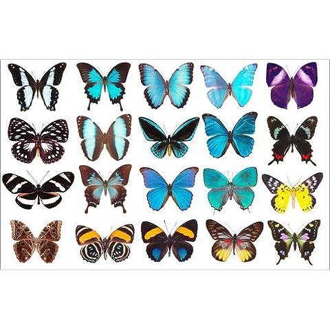 Stampa su tela 30 x 20 cm: collection of butterflies di Colourbox - poster pronti, foto su telaio, foto su vera tela, stampa su tela