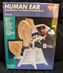 Skilcraft Human Ear Anatomically Accurate0