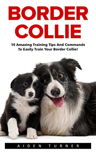 border-collie-10-amazing-training-tips-and-commands-to-easily-train-your-border-collie-dog-training-