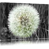 suchergebnis auf f r wandbild pusteblume schwarz weiss bilder poster kunstdrucke. Black Bedroom Furniture Sets. Home Design Ideas