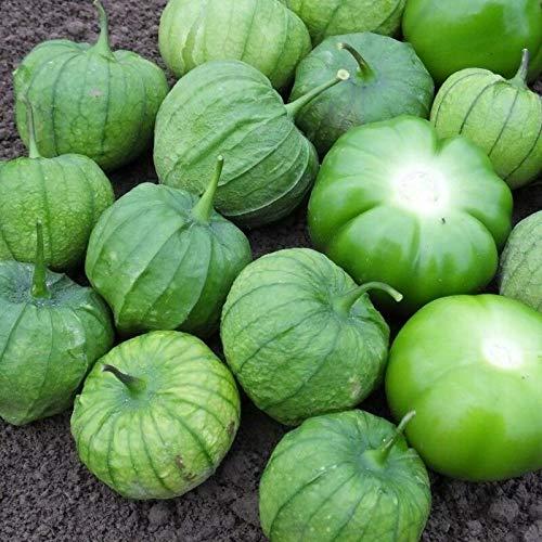 PLAT FIRM Germinazione dei semi: 50 - Semi: Tamayo ibrido F1 Tomatillo Semi - per salse verdi e cucina messicana !!!