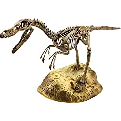 Edu Science vt045–Esqueleto de Velociraptor