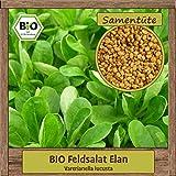 Hochwertige BIO Feldsalat Elan Samen Saatgut einjährig aus natürlichem Anbau Herkunftsland Deutschland