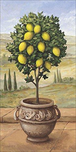 lder I Bild auf Leinwand Leinwandbilder Wandbilder 30 x 60 cm Botanik Bäume Obstbaum Malerei Creme A1TP Zitronenbaum ()