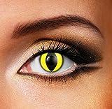Funky Vision Kontaktlinsen - 12 Monatslinsen, Yellow Cat, Ohne Sehstärke, 1 Stück