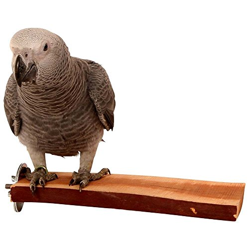 Manzanita Flat Perch - Large (Parrot Perch)
