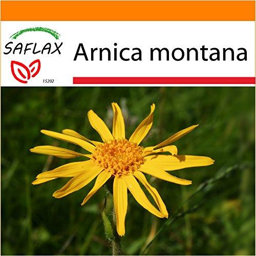 SAFLAX - Garden in the Bag - Heilpflanzen - Echte Arnica - 40 Samen - Arnica montana - Garden In A Bag