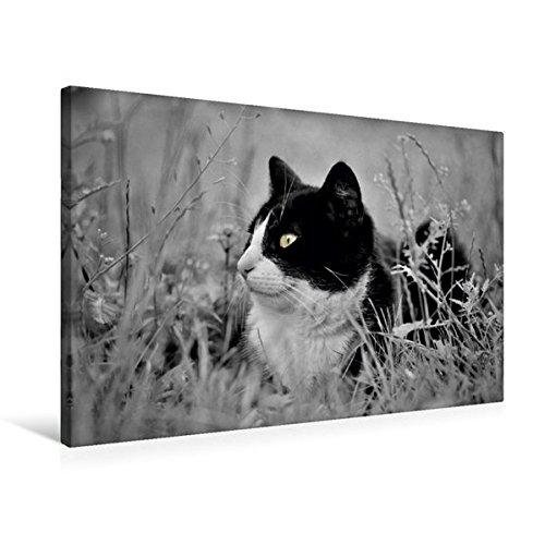 Premium Textil-Leinwand 75 cm x 50 cm quer, Ein Motiv aus dem Kalender Miezekatzen Planungskalender | Wandbild, Bild auf Keilrahmen, Fertigbild auf echter Leinwand, Leinwanddruck (CALVENDO Tiere)
