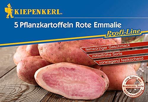 Kiepenkerl 612945 Kartoffel Rote Emmalie 5 Stück (Pflanzkartoffeln)