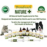 ADVANCED LIVER CARE DETTOX for DOGS and CATS - AWARD WINNING PRODUCT! - with Concentrated Milk Thistle - All Natural… 11