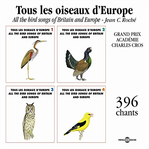 Collared Dove (Tourterelle Turque (Collared Dove))