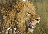 Löwen in freier Wildbahn (Wandkalender 2018 DIN A4 quer): Löwen in ihrem natürlichen Lebensraum (Monatskalender, 14 Seiten ) (CALVENDO Tiere) [Kalender] [Apr 01, 2017] Stanzer, Elisabeth