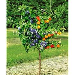 Pinkdose Hohe Qualität Bonsai Familie Brin Prunus Bonsai Ornamental Süße Frucht Kirschpflaume Strauch Baum Pflanze, weit verbreitet 10 stück: l