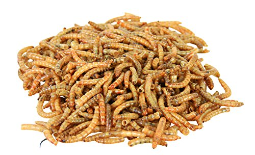 larves-de-vers-de-farine-sechees