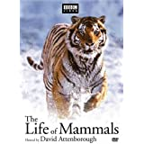 The Life of Mammals (TV) Poster (27 x 40 Inches - 69cm x 102cm) (2002) Style B
