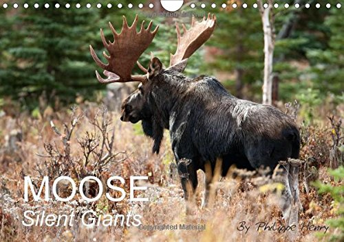 MOOSE / UK-Version 2016: Silent Giants (Calvendo Animals)