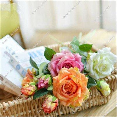 Exotique Miniature Bonsai Fleur Rose Rosas Graine Bricolage jardin et maison embellissant de purification d'air 110 Pcs/Sac 7