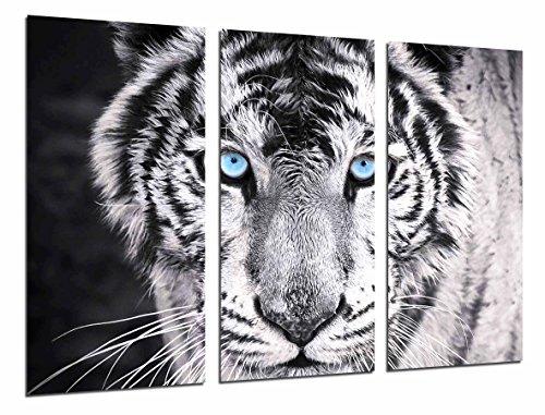 Cuadros Cámara Cuadro Fotográfico Tigre Blanco y Negro, Ojos Azules, Animales, 97 x 62 cm XXL