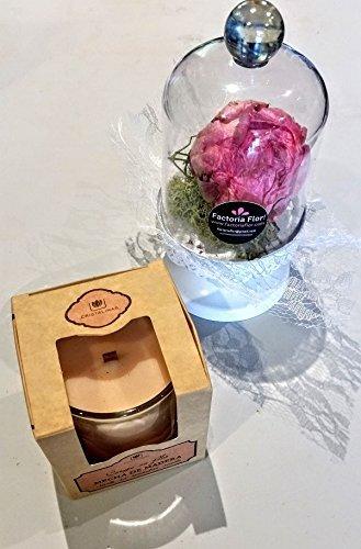 Peonía natural preservada en campana de cristal+ vela aromatíca mech