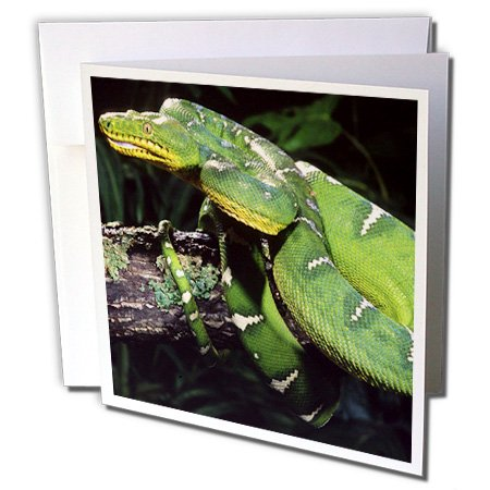 3drose Emerald Tree Boa Snake, NA02dno0480–David Northcott–Grußkarten, 15,2x 15,2cm, Set 6(GC 83978_ 1)