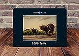 VERO PUZZLE 47405 Tierwelt - Katzen, 1000 Teile in hochwertiger, cellophanierter Puzzle-Schachtel